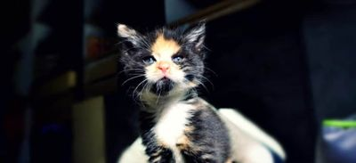 Liberté Animale: une collecte alimentaire spéciale chats et chatons...