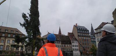EN IMAGES | Le grand sapin de Strasbourg retrouve la place Kléber !