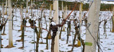 Le muscadet 2021 est déjà très frais, voire gelé...