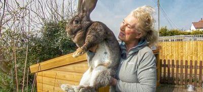 Un vol de lèse-majesté : le lapin Darius a été enlevé