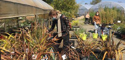 Le boom des jardineries et pépinières !