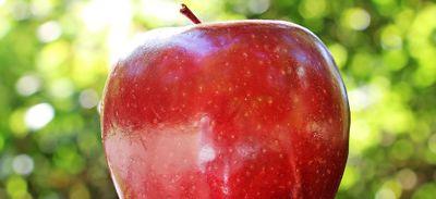 La pomme et le cidre à l'honneur à l'archipel de Fouesnant (29)