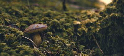 Sorties cueillettes de champignons.