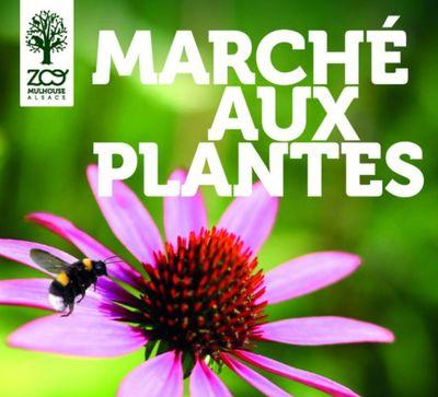 Le marché aux plantes