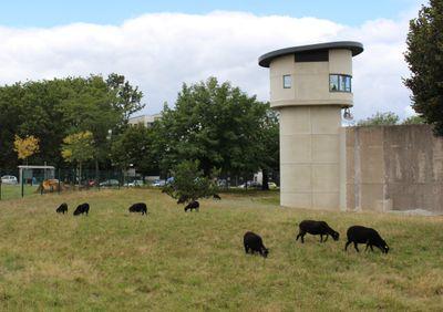 Nantes : des moutons en prison !