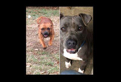 Guérande : deux chiens volés à la fourrière de la presqu'île