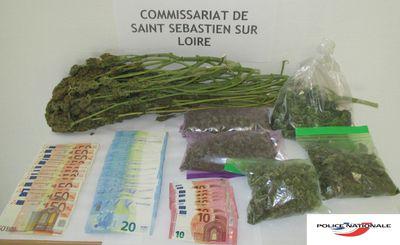 Saint-Sébastien : Trahi par l'odeur du cannabis qu'il cultivait...