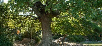Beaucaire, Pézenas, Tautavel : 3 idées balade dans la zone des 10...