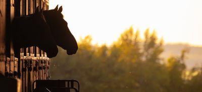 Cheval avenir : de meilleurs lendemains pour les chevaux de courses