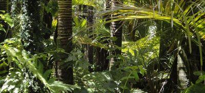 Son avion atterrit en urgence, il survit 36 jours en Amazonie (photo)