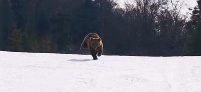 La folle course-poursuite entre un ours et un randonneur (Vidéo)