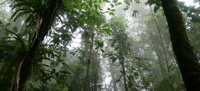 Déforestation : la Colombie a perdu l'équivalent de sa capitale en...