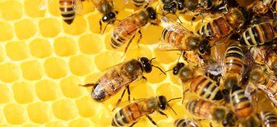 Gard : le plus grand mur à abeille de France est à Montfrin