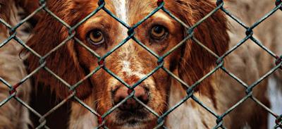 Poitou: hausse des abandons d'animaux