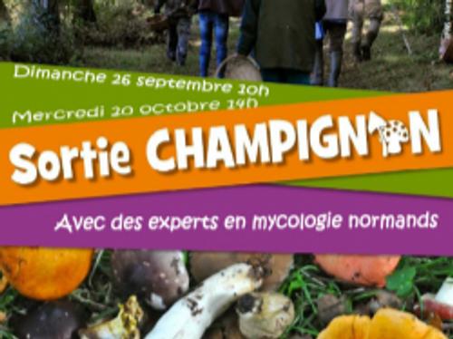 SORTIES CHAMPIGNONS - Saint Sever
