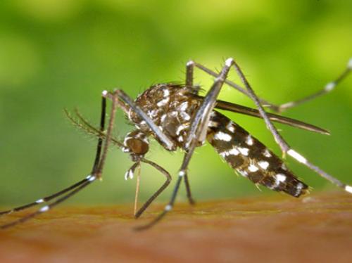 [ ENVIRONNEMENT ] Attaque de moustiques sur la région