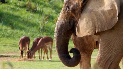 Zoo African Safari : une journée solidaire au profit de...