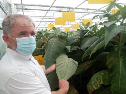 La Ferme des insectes, pour protéger les plants de tomates !