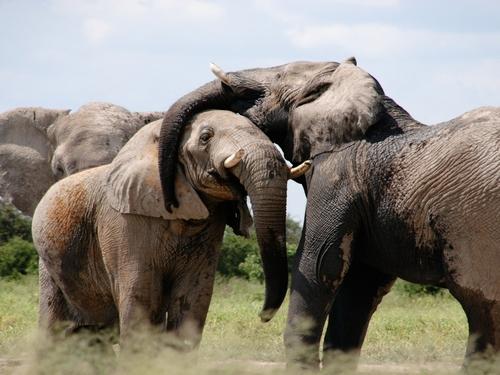 Trafic de défenses d'éléphant et de cornes de rhinocéros, à Rennes
