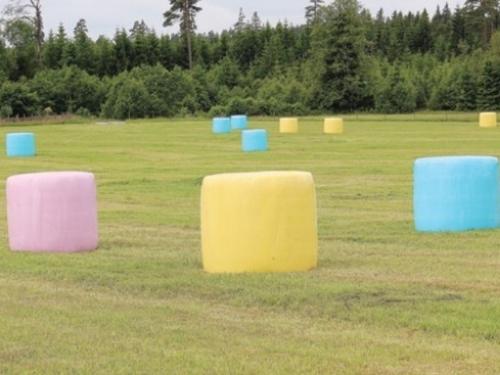 Pourquoi les balles de foin sont emballées avec du plastique rose,...
