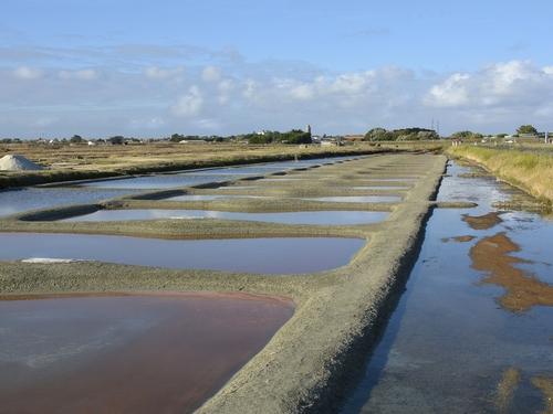 Les paludiers annoncent une récolte de sel médiocre