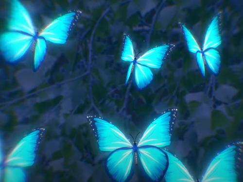 Vintage Culture sort son nouveau titre Butterflies