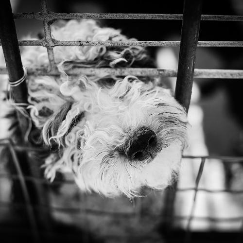 Record d'abandons d'animaux cet été : la SPA appelle à stopper...