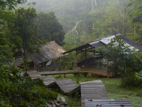 Guyane: une adolescente tuée dans l'effondrement d'un abri en bois...
