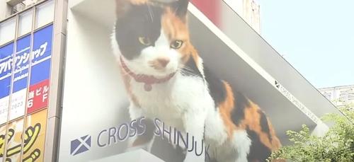 Un énorme chat 3D affiché en pleine rue effraie les passants (vidéo)