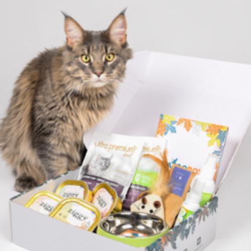 Les chats aussi ont droit à leur box mensuelle