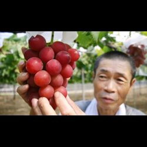 Une grappe de raisin adjugée à 10 000 euros