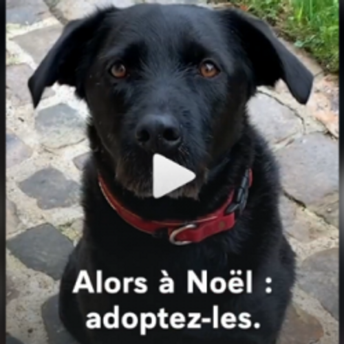 Nemo, le chien des Macron, sensibilise à l'adoption dans une vidéo...