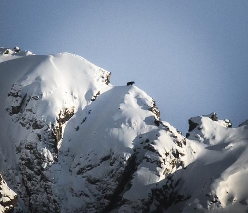 Un photographe immortalise un ours sur une crête enneigée