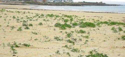 La végétation reprend ses droits sur la plage