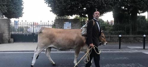 Une vache dans les rues de Nantes