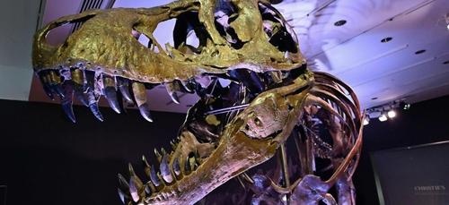 Stan, le T-Rex, vendu aux enchères à 32 millions de dollars
