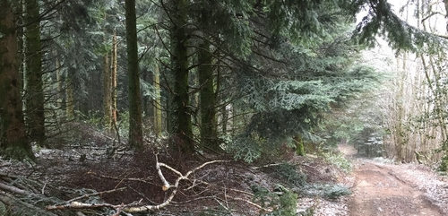 Contrat forêt : la région Bourgogne-Franche-Comté doit revoir sa...