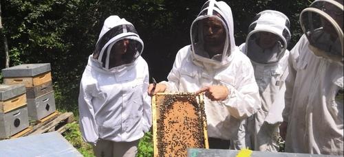 Des ruches connectées en Bourgogne-Franche-Comté