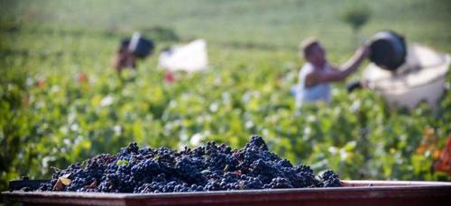 Les vins côte-d'oriens rencontrent un joli succès au Concours...