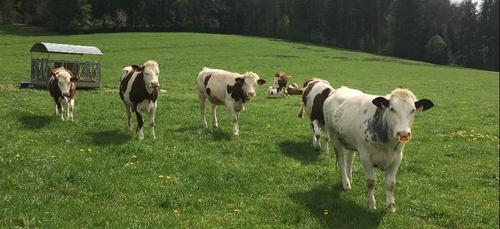 Politique agricole commune (PAC) : 104 millions d'euros d'aides...