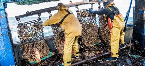 Top départ pour la pêche à la Coquille Saint-Jacques en Baie de...