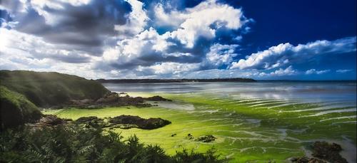 Échouages tardifs d'algues vertes