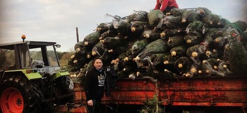 Des centaines de sapins dérobés dans le Finistère