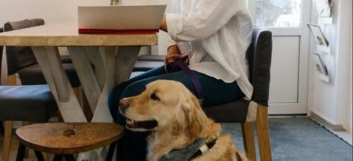 Handi'chiens Bretagne recherche des familles d'accueil