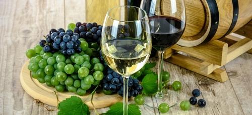 La première cuvée de vin bigouden est attendue pour la fin de l'année.
