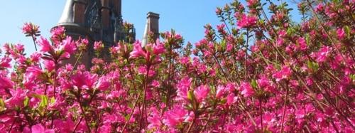 Les saisons botaniques de Trévarez