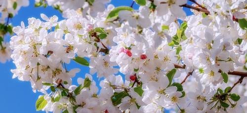 Le marché de la fleur d'été aura bien lieu à Quimper.