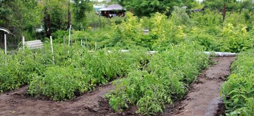 Plutôt que de jeter, des producteurs partagent leurs plants invendus.