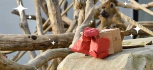 Venez découvrir le Noël des animaux au Parc zoologique de Paris