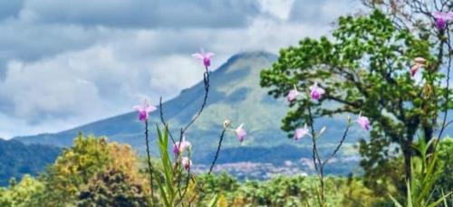 Échappées Belles en Martinique